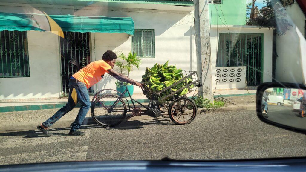 Plantain Seller La Romana
